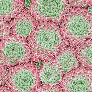 PWPJ091. Pink Succulent Philip Jacobs