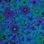 petunias bluex pwpj050