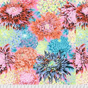 japanese chrysanthemum contrast pwpj041.contr