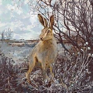 hedgrow-hare-2 Kate Findlay