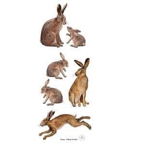 Hare-panel