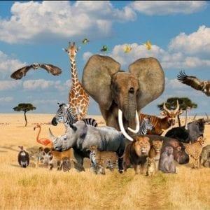 African Safari 78830.101