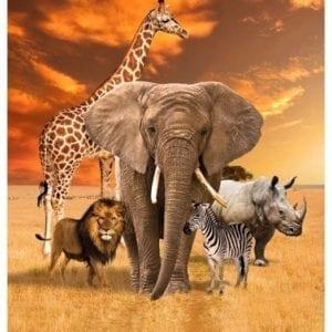 African Safari 78830.102