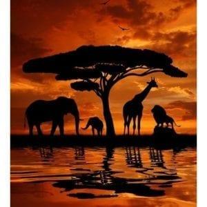 African Safari 78830.103